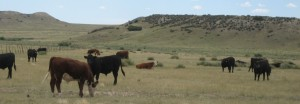 River Watch Ranch - Grass-fed Beef
